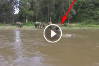 Слон спаситель