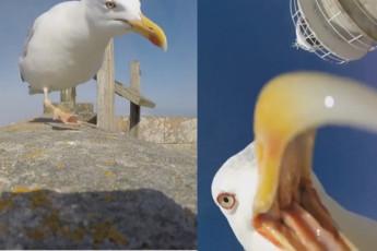Чайка и камера