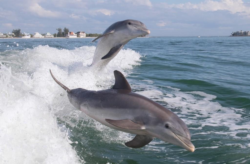 Дельфинчик 1