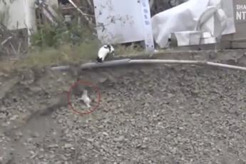 Кошка спасла
