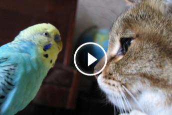 Котя и Попка
