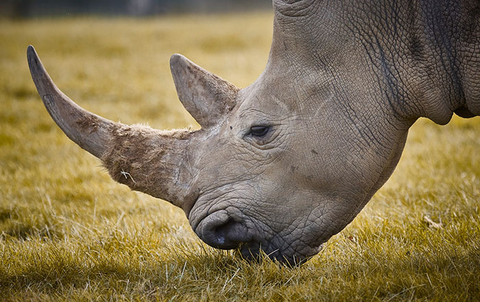 Носорог 2