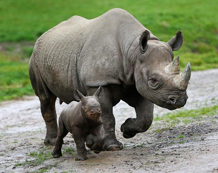 Носорог 5