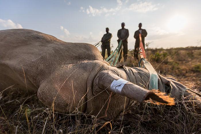Носорог 6