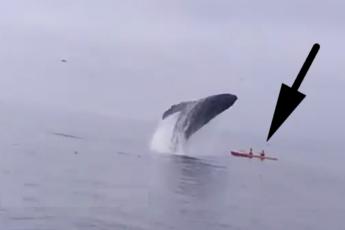 Прыжок кита 5