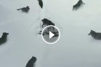 Волки с сердцем