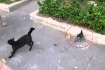 Кошка в бой