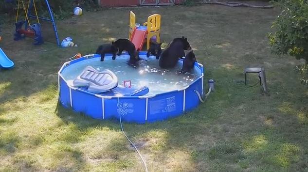 Мишки в бассейне