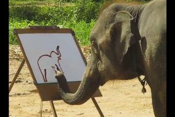 Рисует слонов
