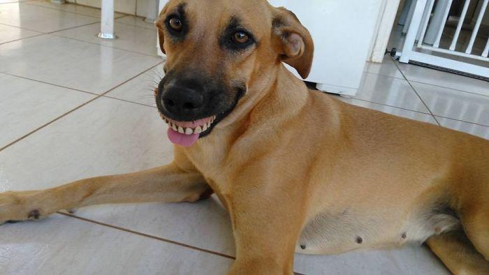 Собака-улыбака 1