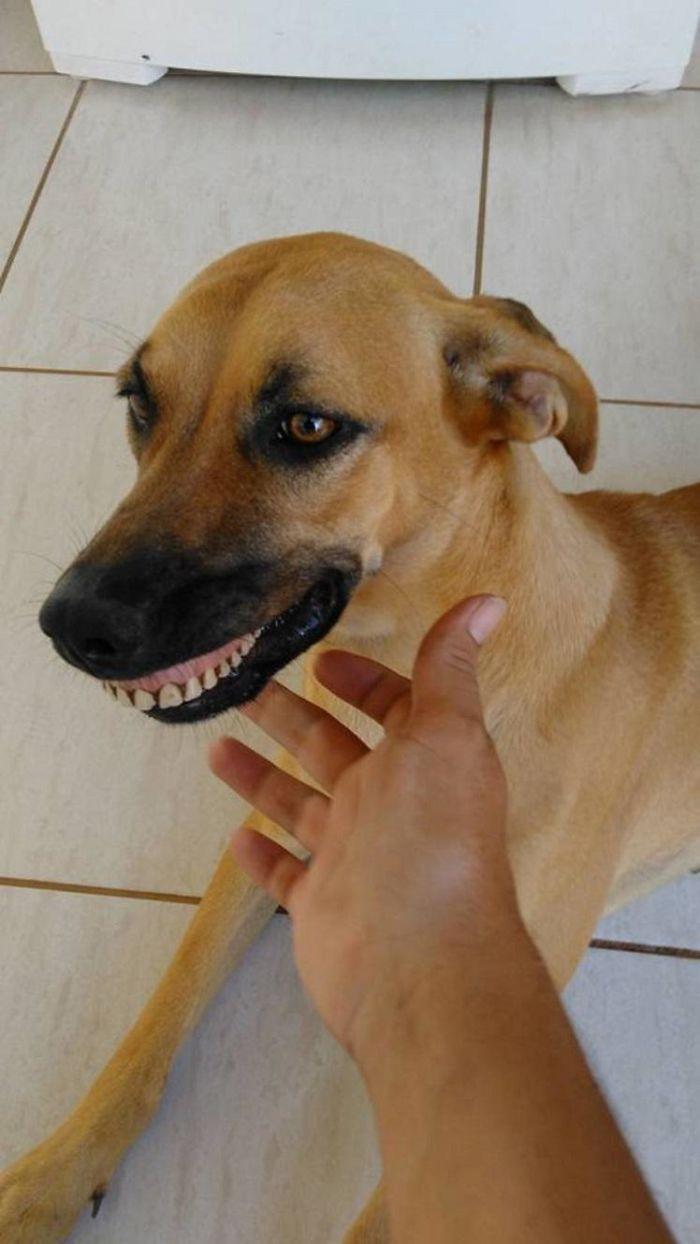 Собака-улыбака 2