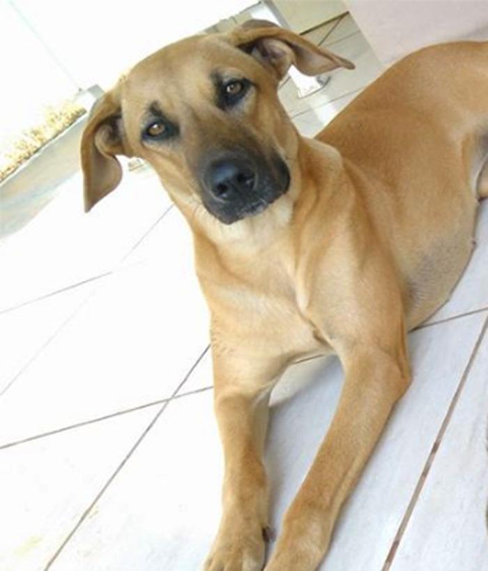 Собака-улыбака 5
