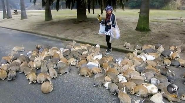 Кроликихи