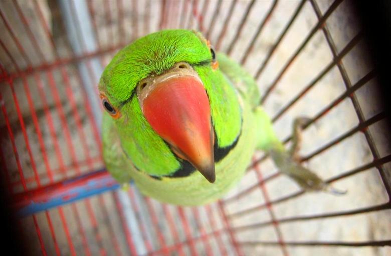 Птичка попка 1
