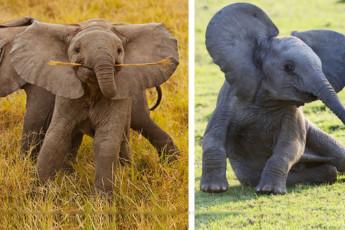 Слоники ого