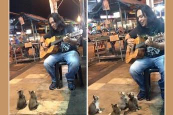котята и гитарист
